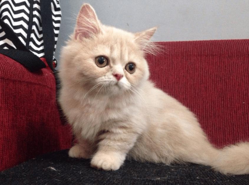 kucing.info